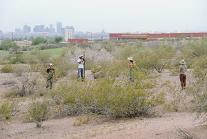 desert shrub study at central Arizona phoenix LTER