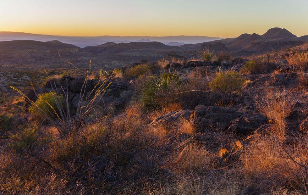 desert landscape in the Chihuahuan desert