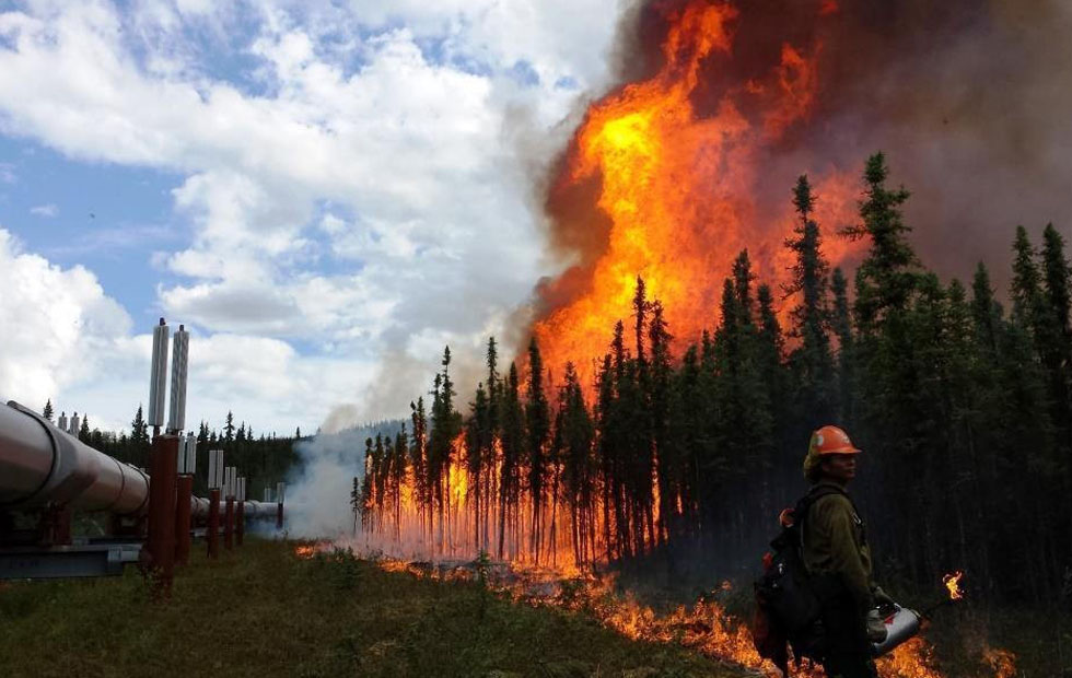 Fire And Ice: Carbon Cycling Feedbacks To Climate In A Warming Arctic